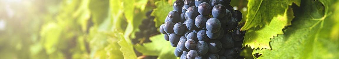 best merlot wine