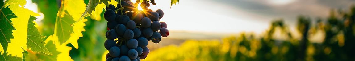 bruno giacosa vini